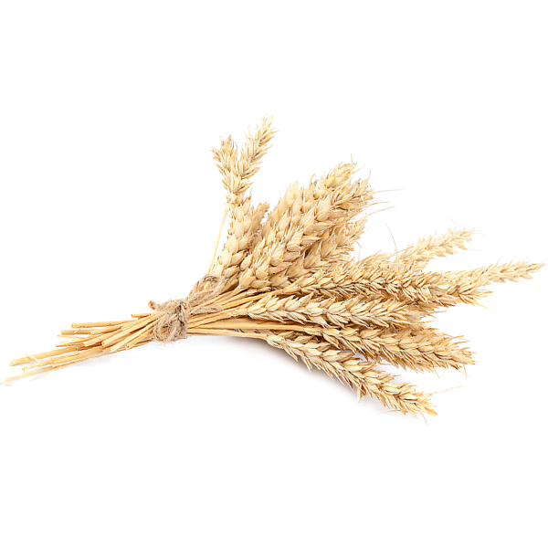 https://copperintheclouds.co.uk/wp-content/uploads/2018/09/british-wheat-1.jpg